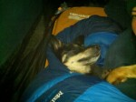 Cassie hogging the sleeping bag